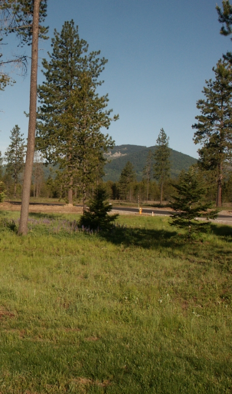 08 Meadow & Mtn Views