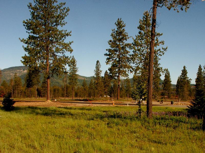 02 Grassy Meadow