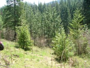 02 Land .88 Acre with trees and open areas