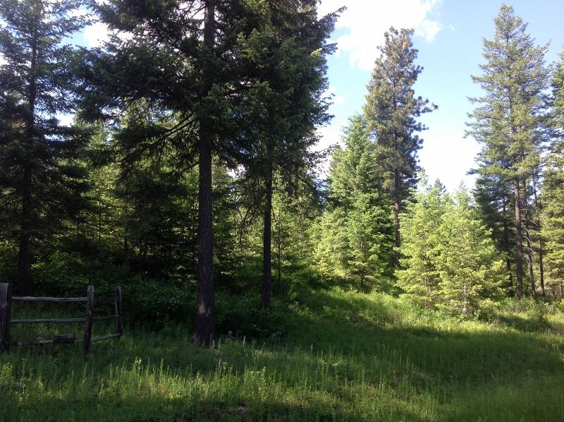 03 Trees